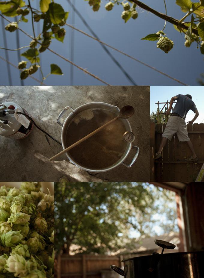 Harvesting Cascade Hops