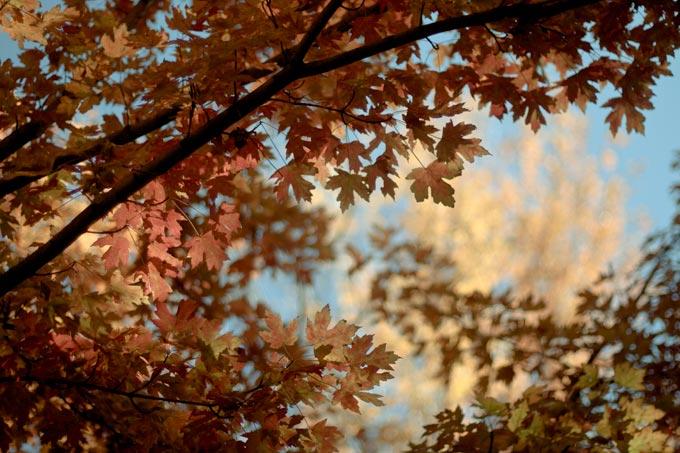 Fall In Denver 2011