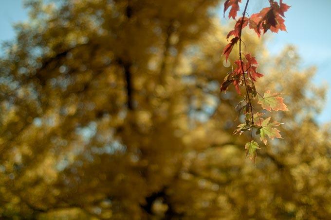Denver Fall Colors 2011