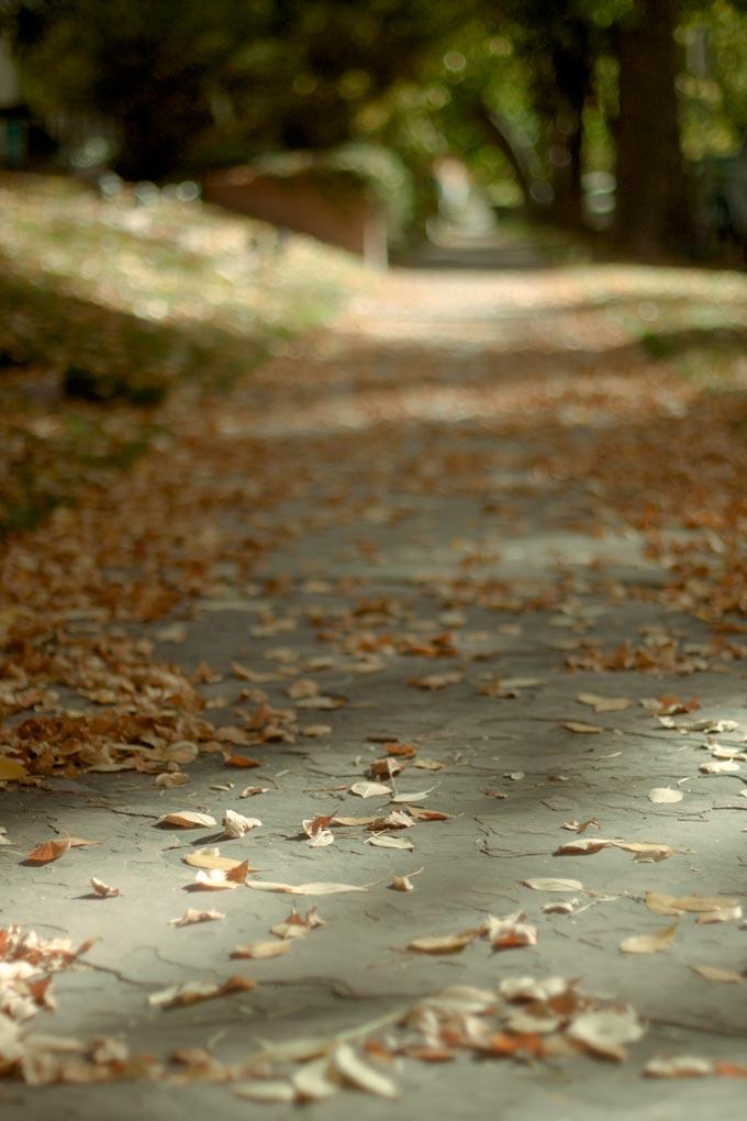 Denver Fall Foliage 2011